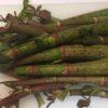 コリコリ食感の山菜「イタドリ」。簡単な下処理で激うま!